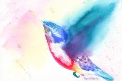 hummingbird-web