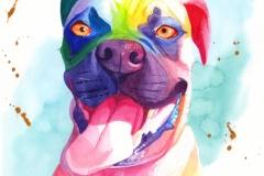 rainbow_rocky-web