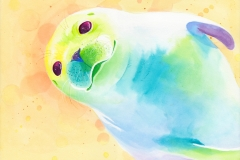 harbor_seal-web